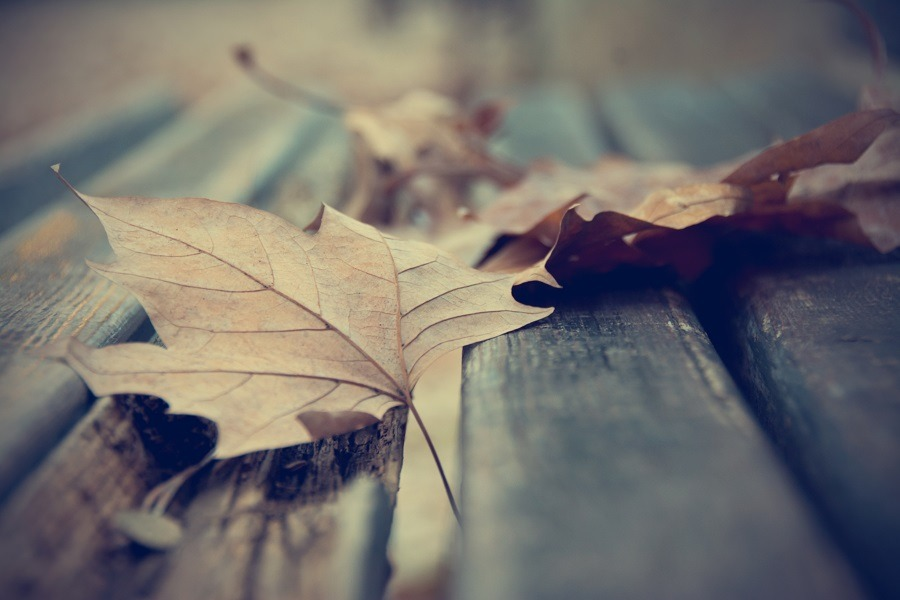 Dead leaves on a wooden bench in autumn.