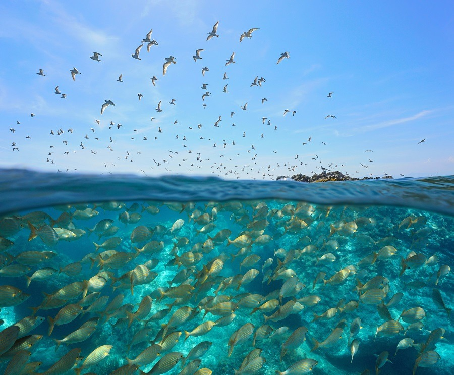 Colony of gulls flying and school of fish underwater.
