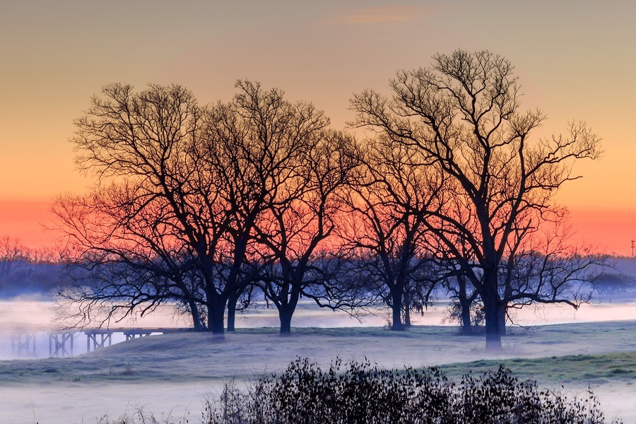 Bare trees on snow covered landscape during sunset.