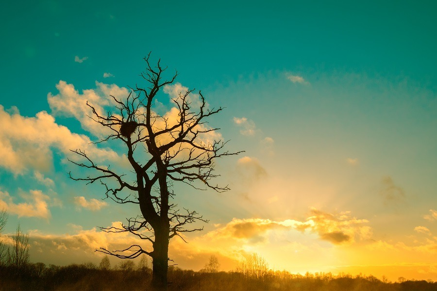 Lonesome tree without leaves against cold sunset sky.