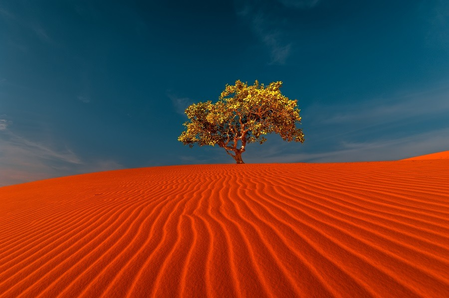 Stunning view of rippled sand dunes and a lonely tree growing under amazing blue sky at desert landscape.
