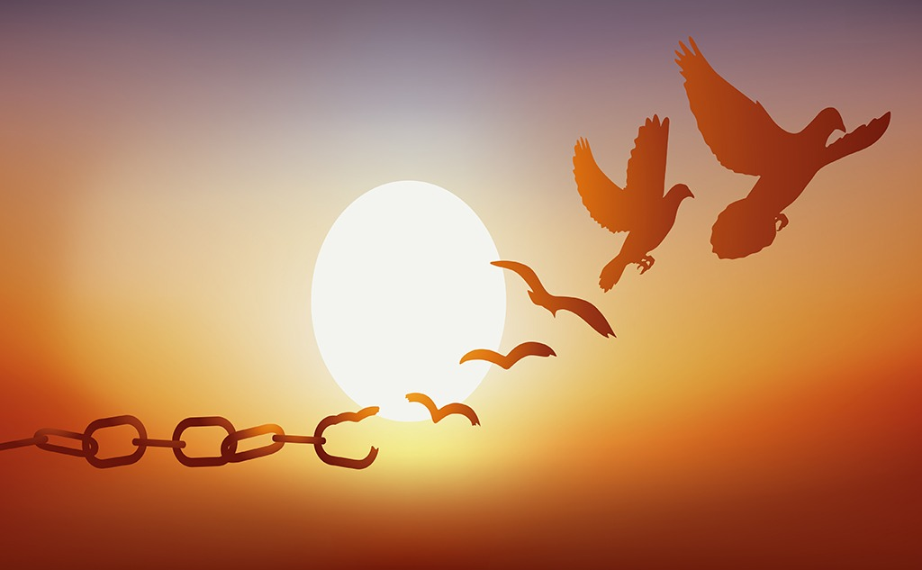 Bird flying away from chain
