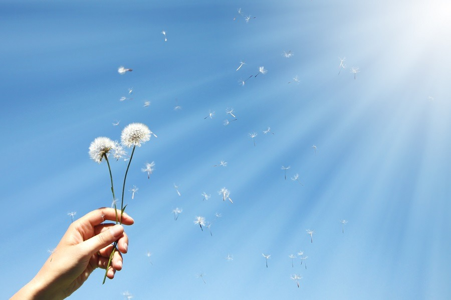 Hand holding out dandelions to the blue sky with bright light shining through.