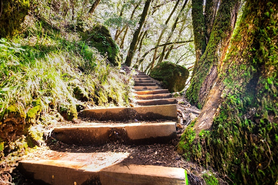 Wooden steps going up through a green forest in Marin County, San Francisco.
