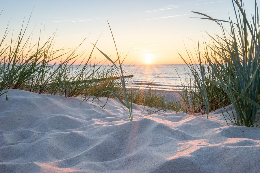Beautiful sunset view through tall beach grasses on the Baltic Sea.