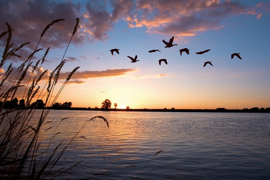 Birds flying over a beautiful sunset on a lake.