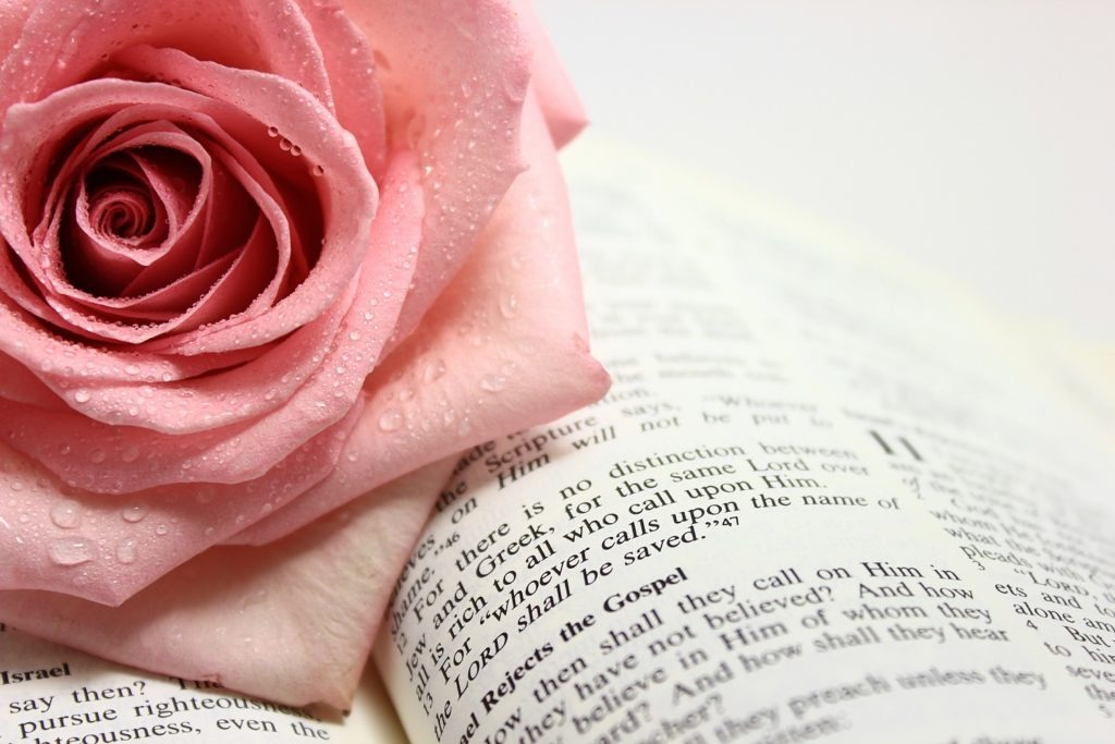 Pink rose on an open Bible.