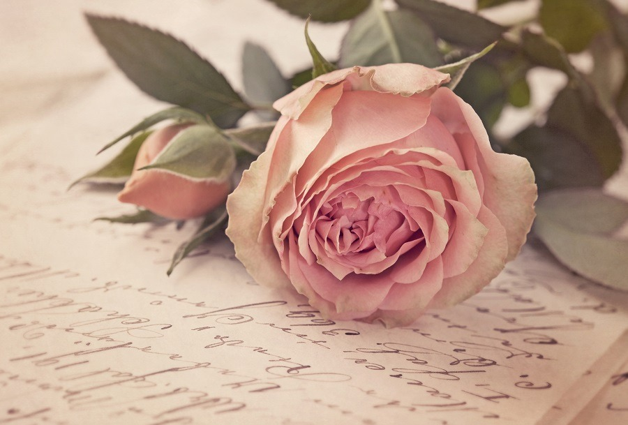 Nice pink rose on top of a handwritten letter.