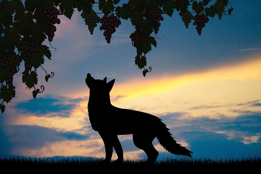 Silhouette of fox and grapes.