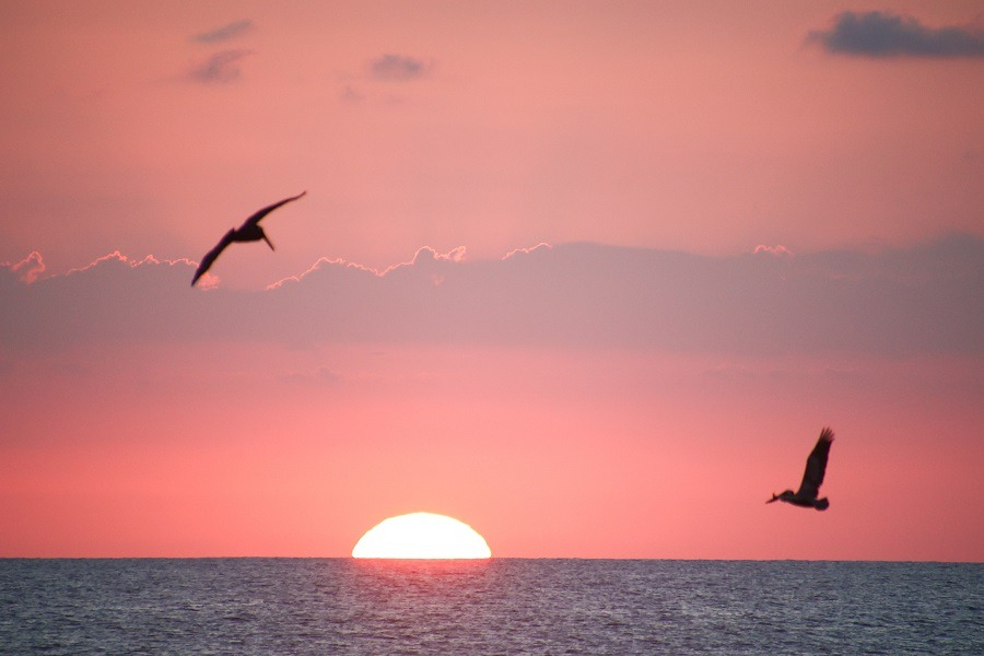 Sunset over the ocean with pelicans flying over the sun in Costa Rica.