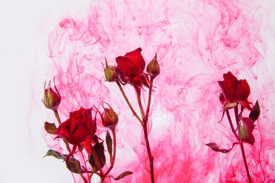 Red roses submerged in water with pink blood blending in water.