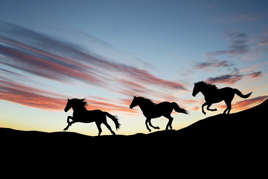 Silhouette of galloping wild horses against the evening sky.