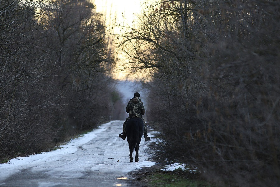 Man on his horse goes into the woods on a snowy road.