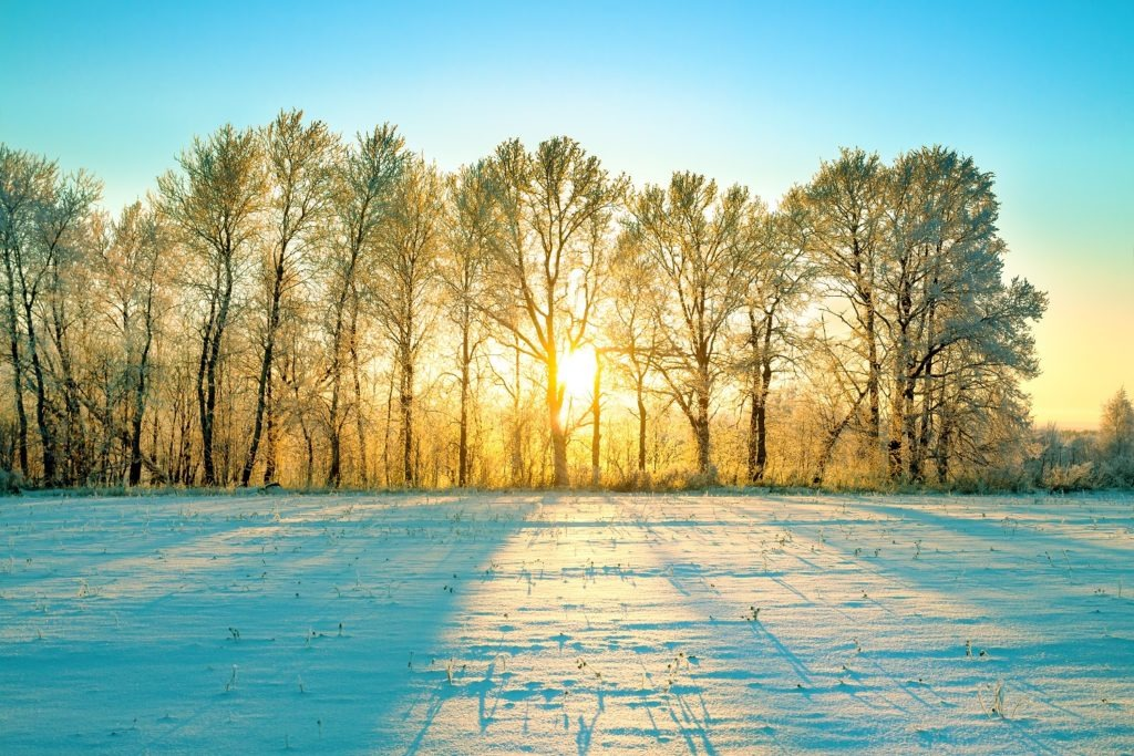 Winter landscape with sunlight piercing through the forest.