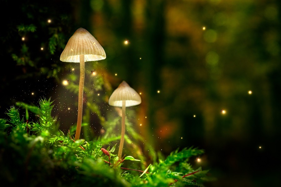 Stunning mushrooms on moss and fireflies in forest at dusk.
