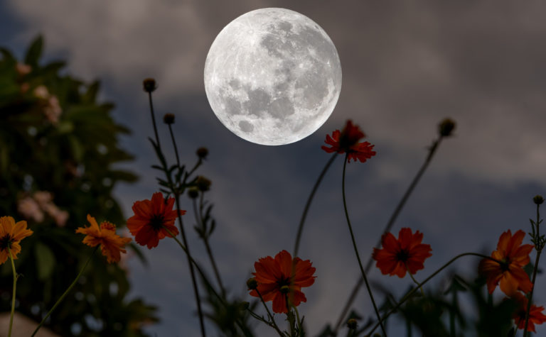 33 Best Poems About the Moon.