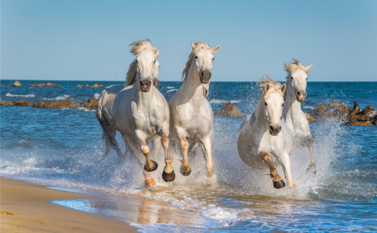 51 Best Poems About Horses (Categorized)